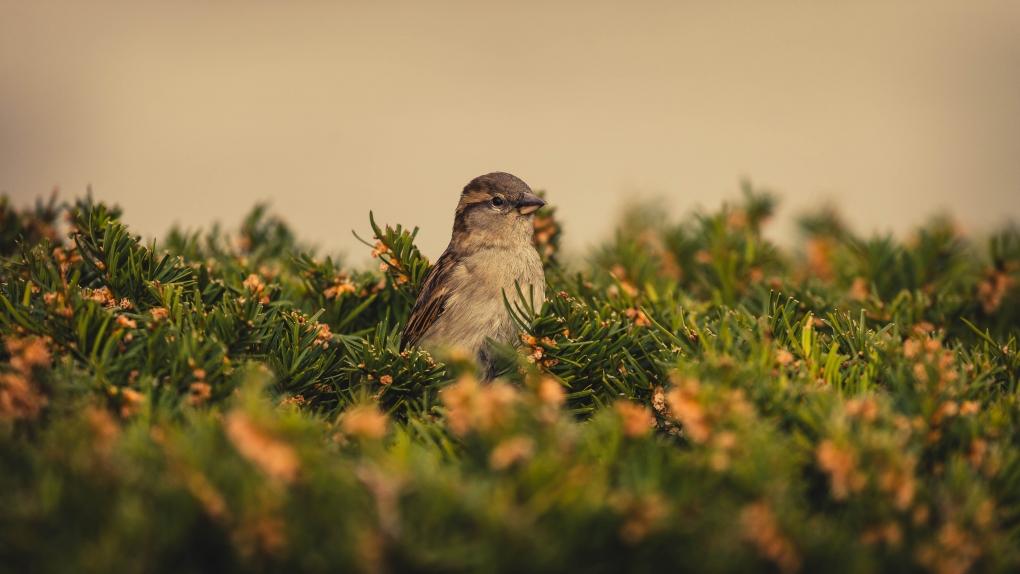 Sparrow by Elliot Parrott