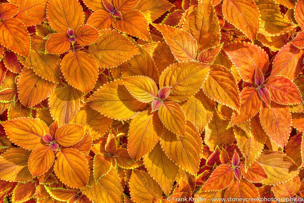 Leaves by Frank Kruller
