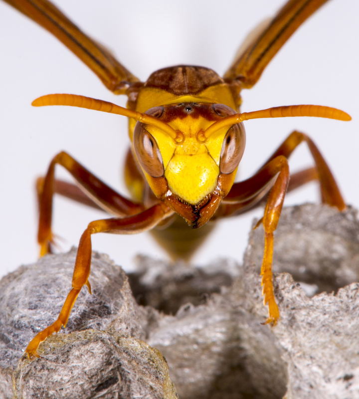 Bug's Life by David Freeman