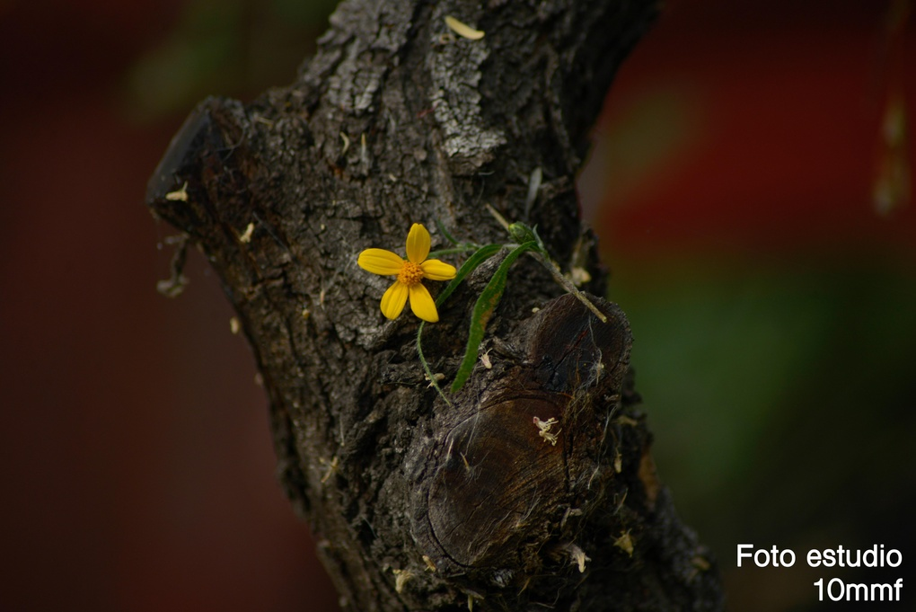 Flower in the tree by Mauricio Martinez