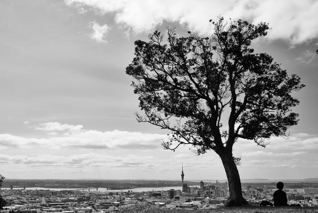 Tree City by Maximilian Mesch