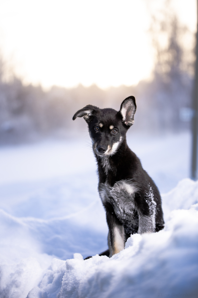 Baby Dog by Tiina Söderholm