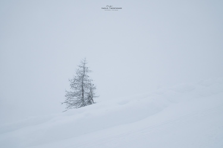 Solo by Paolo Montanari