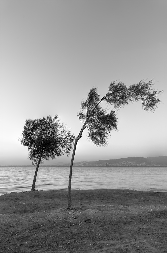 Lonely Trees by Ozden Gumus