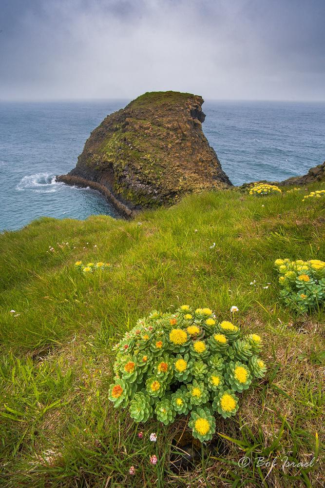 Arnarstapi Cliffs by Bob Israel