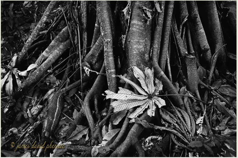 Dried Leaf by James Phenicie