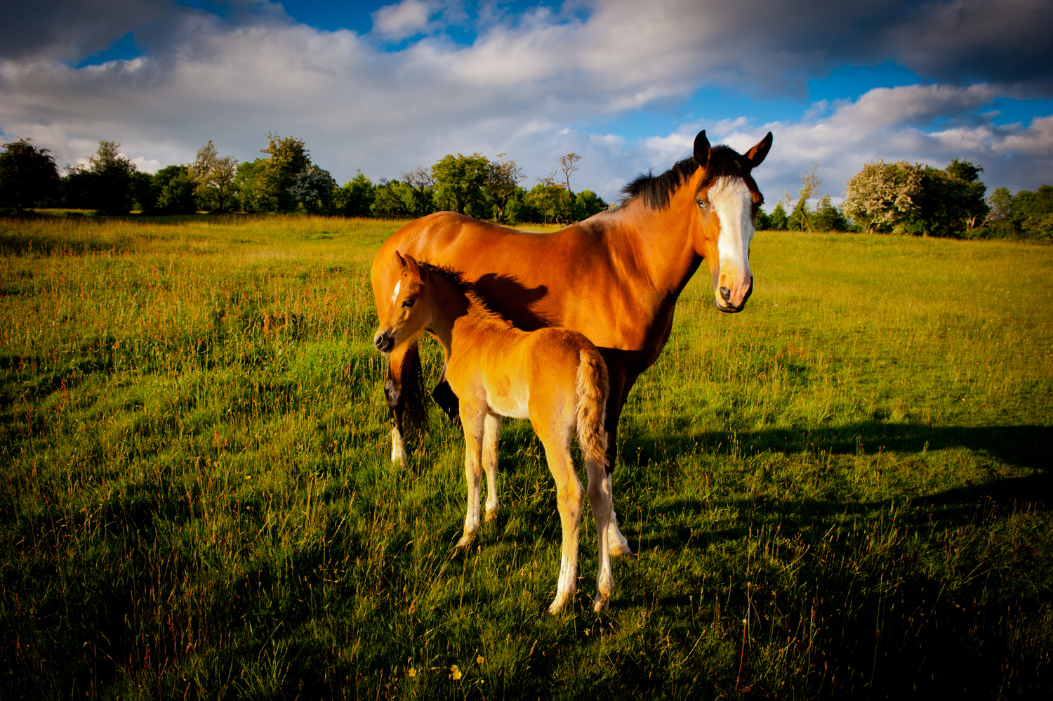 Mother and foal by Richard Downs