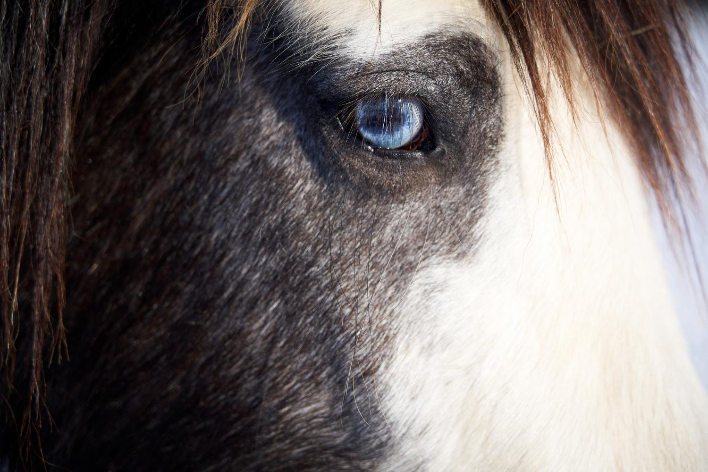 Bowie Eye by Richard Downs