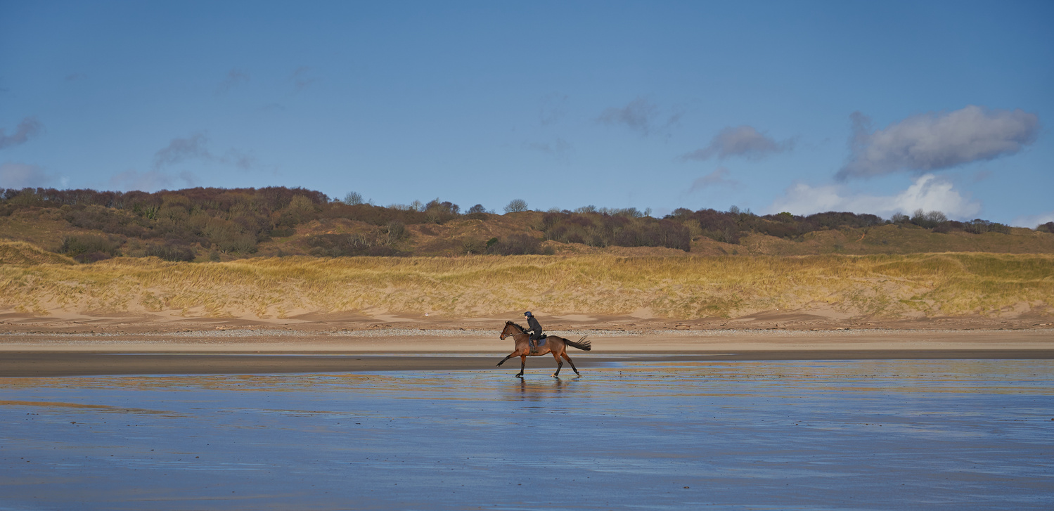 Gallop by Richard Downs