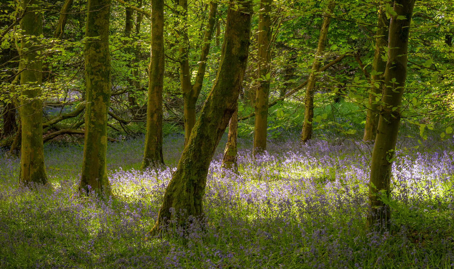 Spring in Wales by Richard Downs