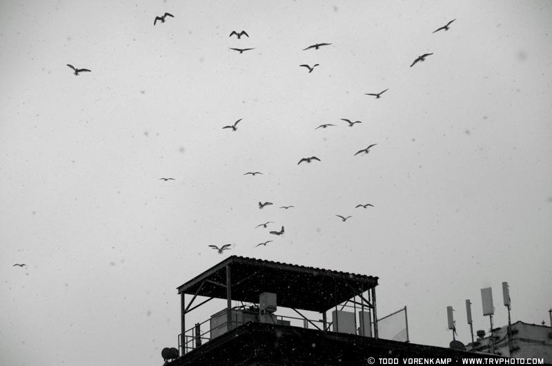 Winter Birds by Todd Vorenkamp