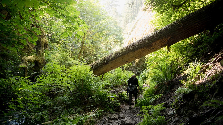 Multnomah Falls, Oregon by Grant Schwingle