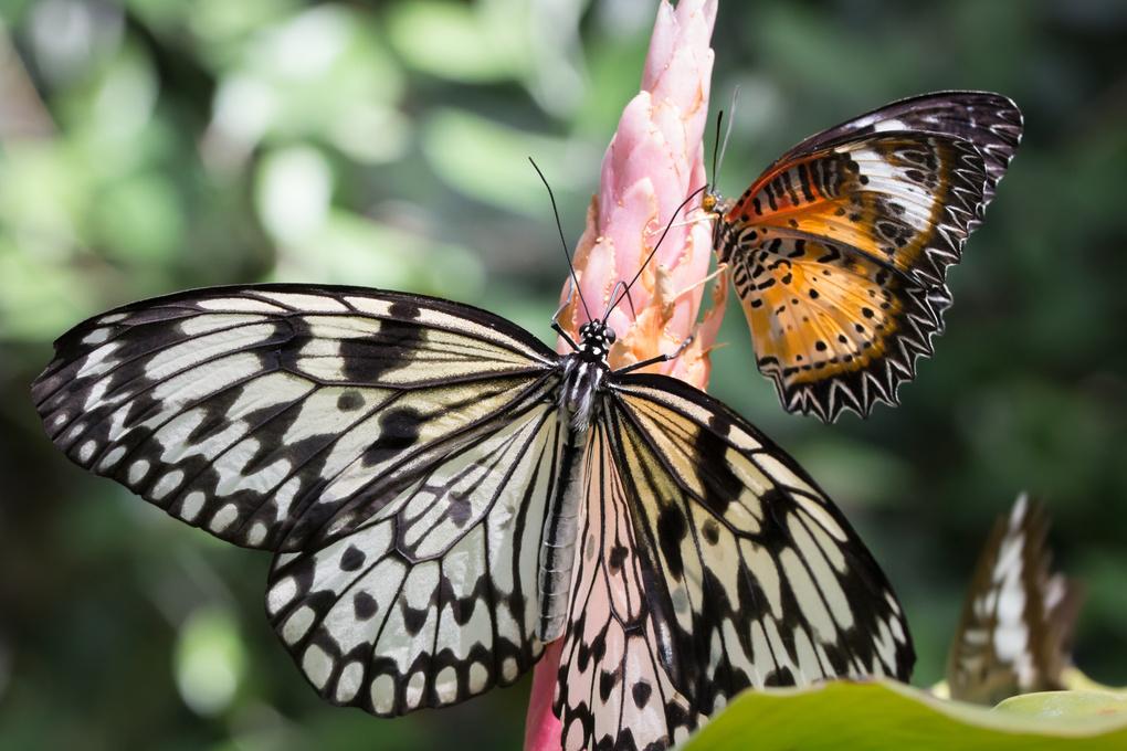 Butterflies by Ryan Kane