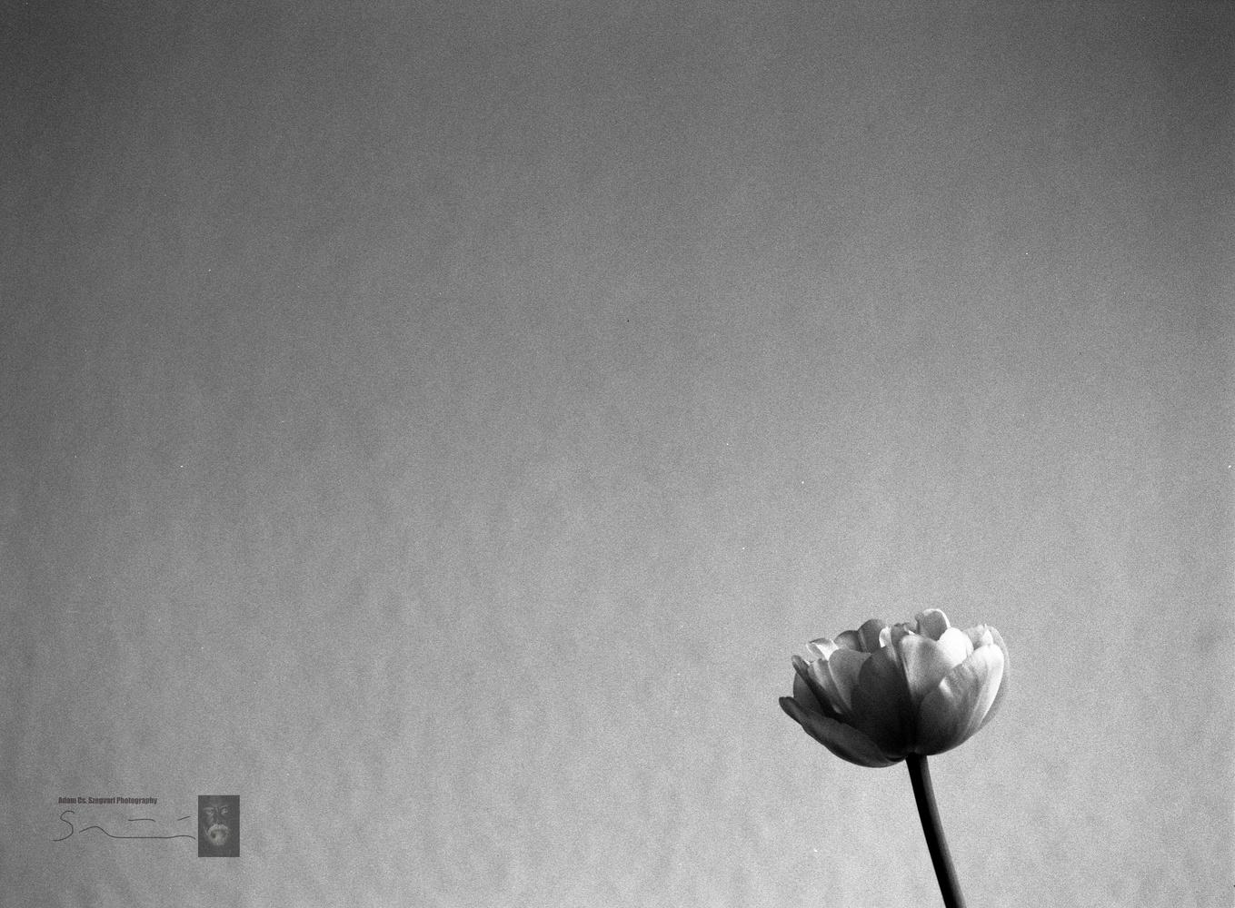 Alone by Adam Szegvari