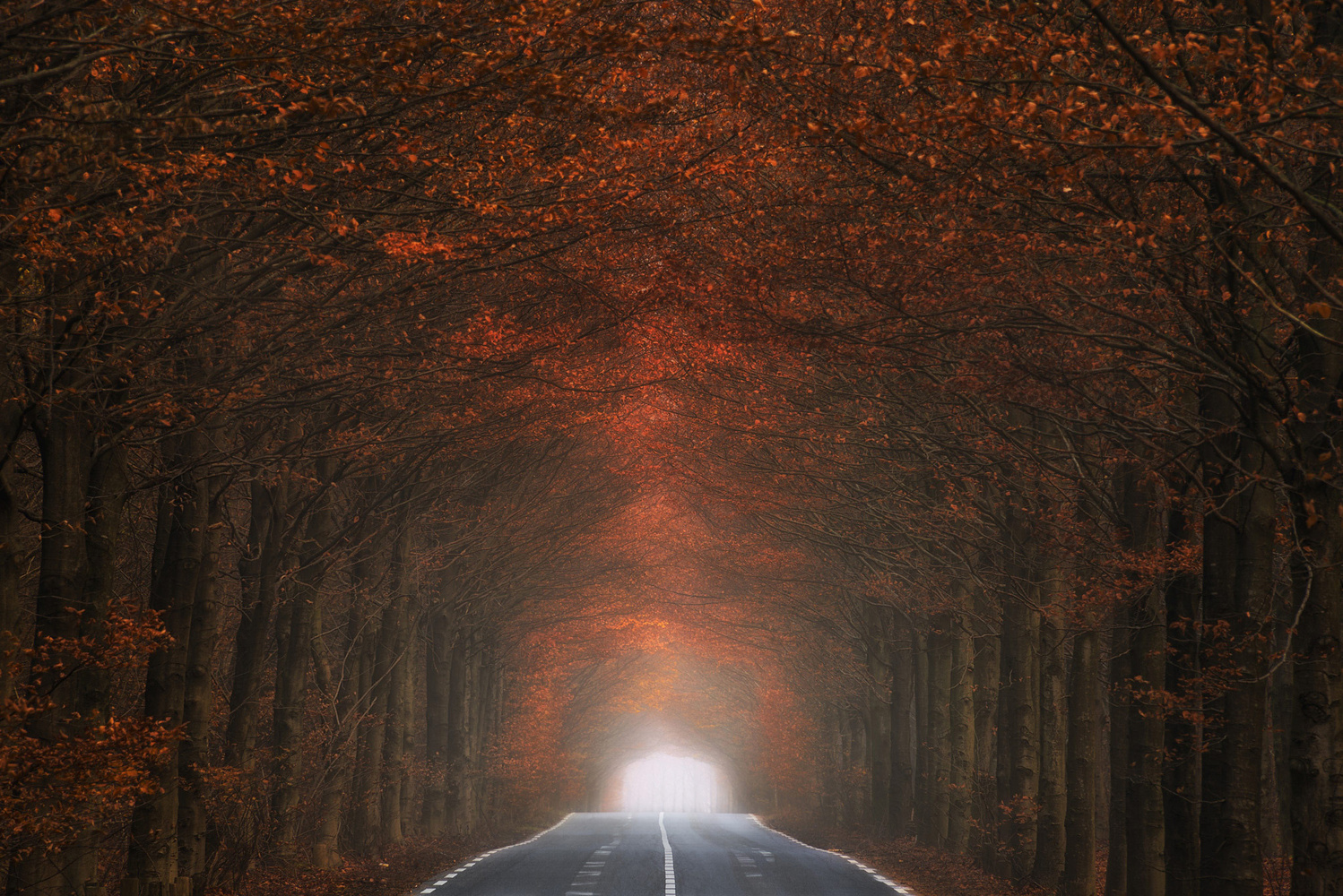Tunnel of fire by Hans Logren