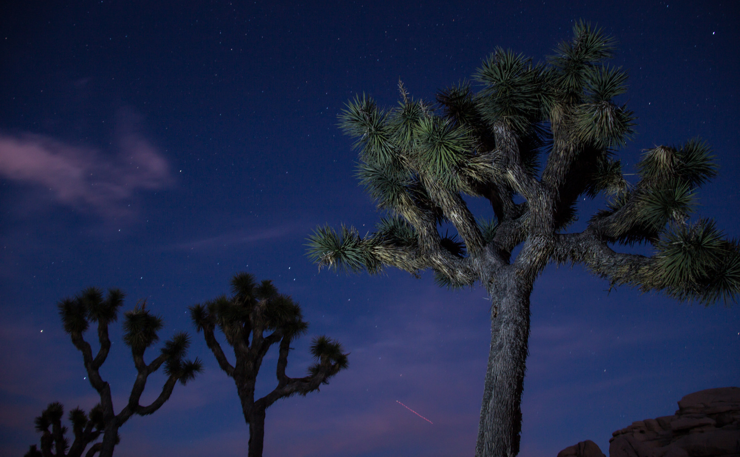 Joshua Trees by Paul Broadhead