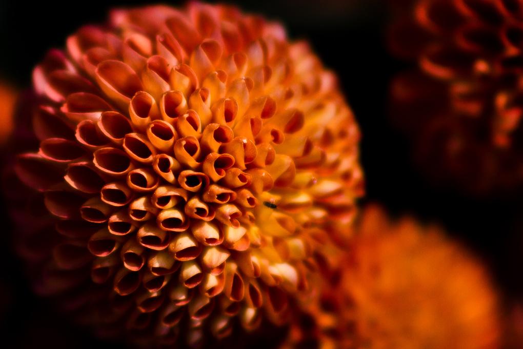 Close up Shot of a flower by saurabh khape