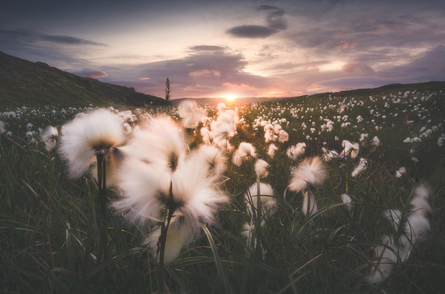 Pillow fields by Kaspars Dzenis