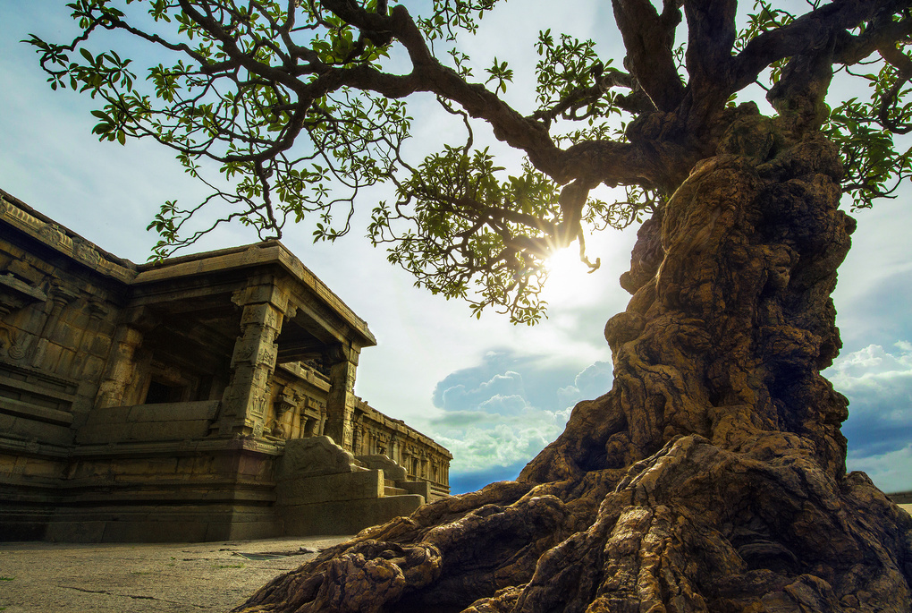 We build few things and Nature builds few. by Sanket Khuntale