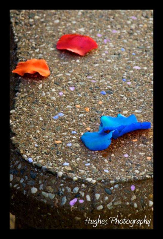 Petals by John Hughes