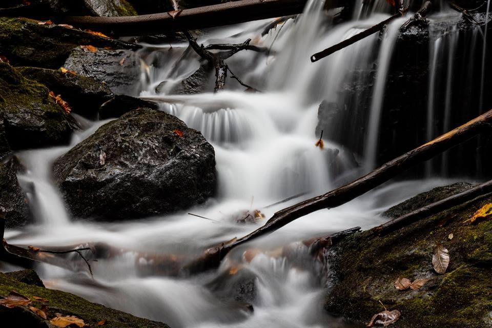 Forest Stream by John Hughes