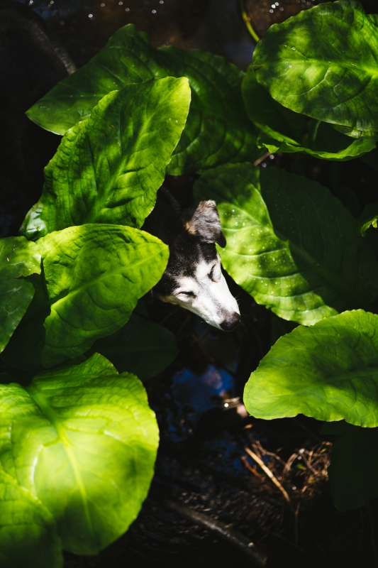 Fred in the Skunk Cabbage by marc osborne jr