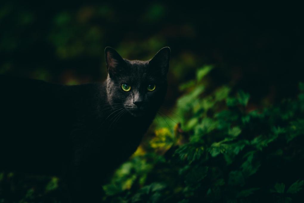 Alaskan Kitty in the Wild by marc osborne jr