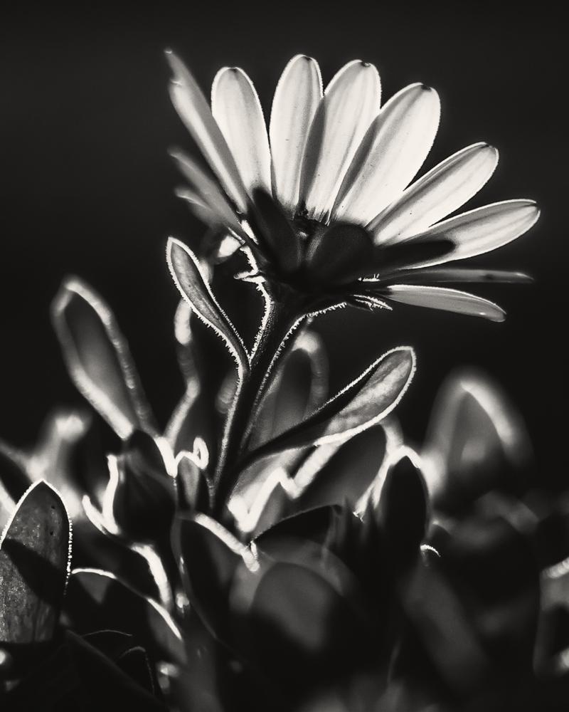 Hope ` by shareef saadi