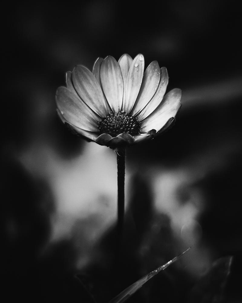 Alone by shareef saadi