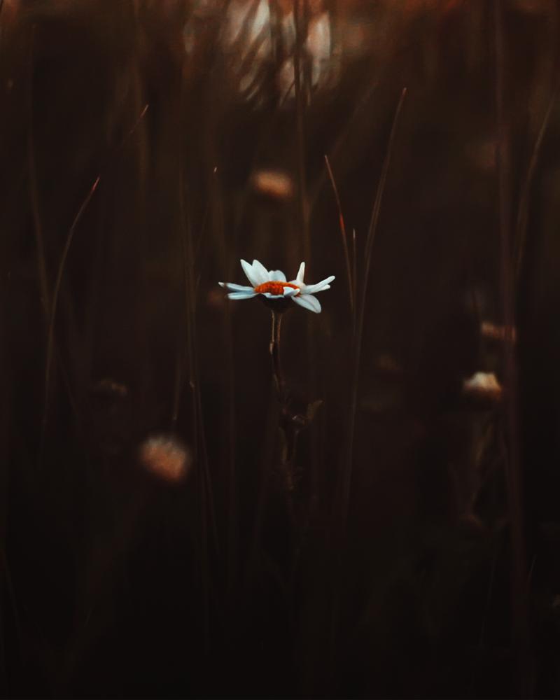 Quite Night ` by shareef saadi