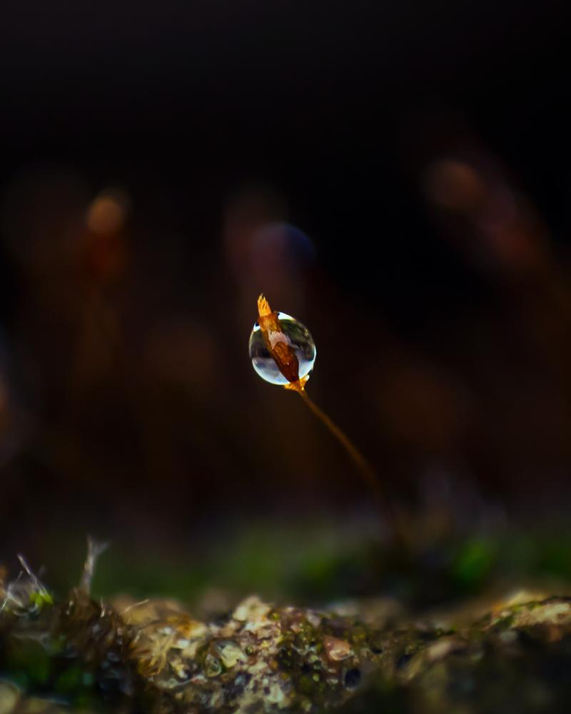Little World by shareef saadi