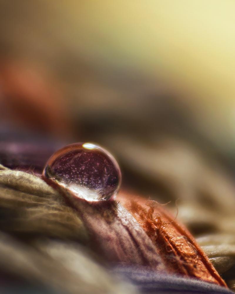 Enchanted ` by shareef saadi