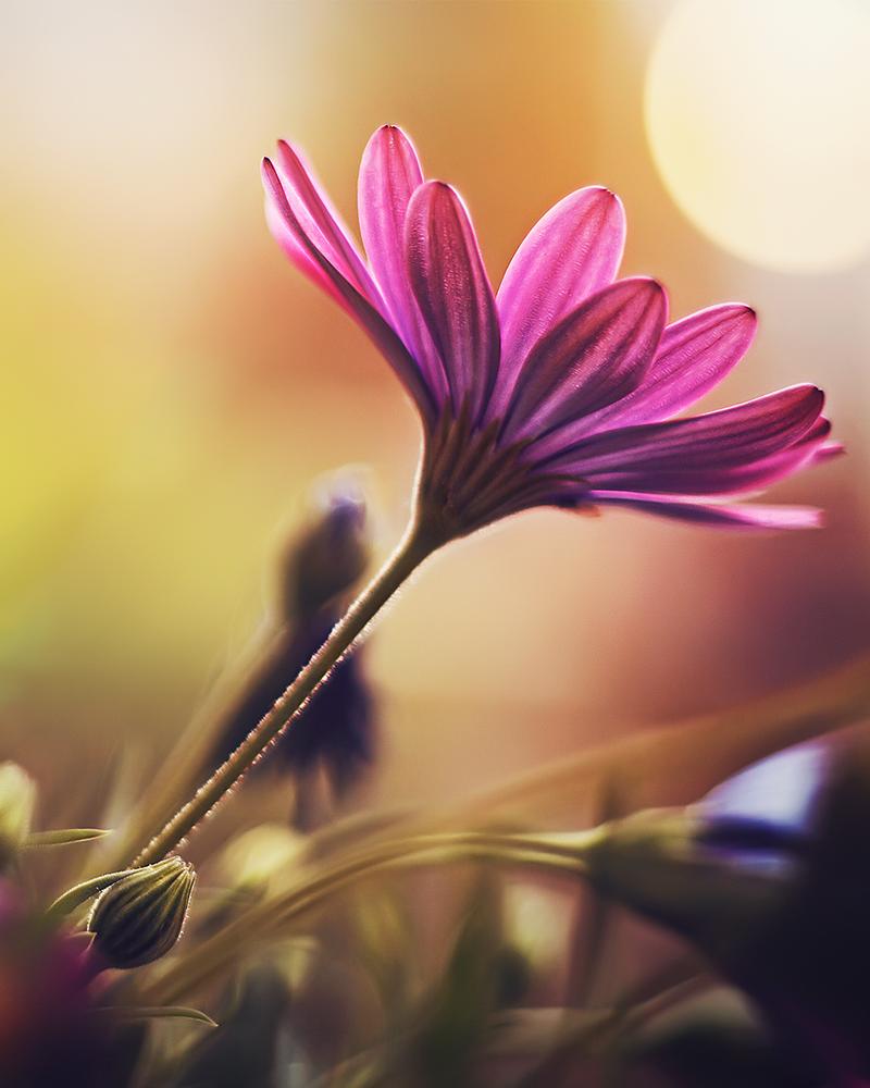 Delight ` by shareef saadi