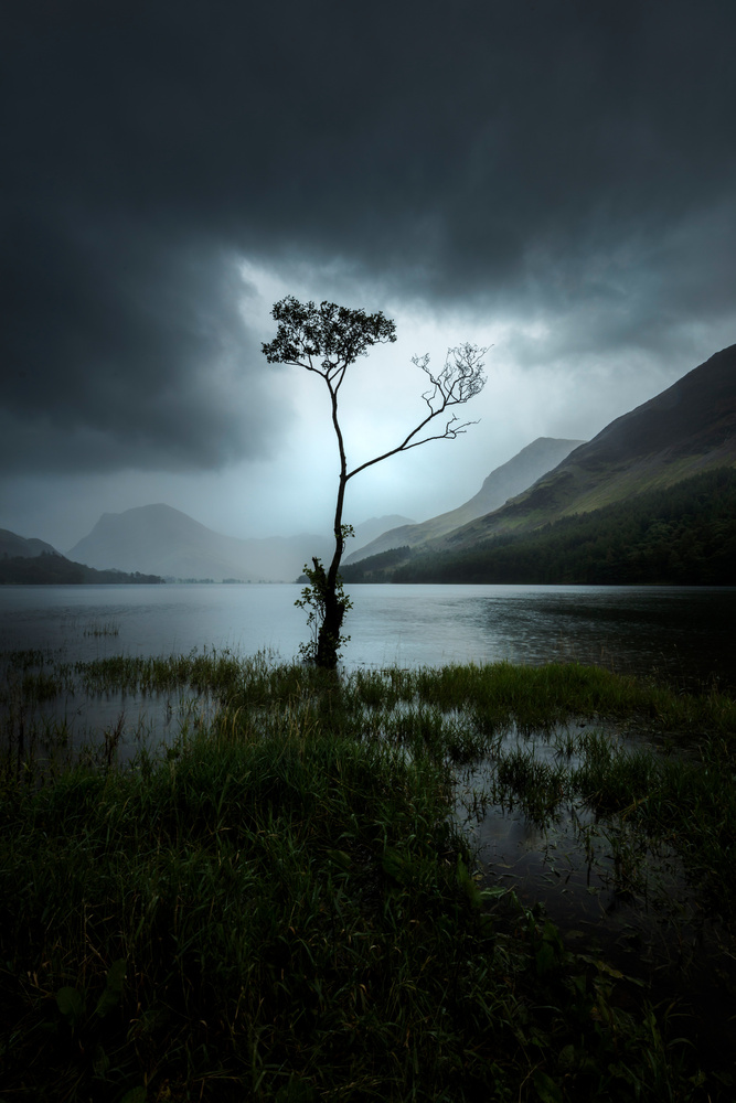 Lone Tree at Buttermere by Mads Peter Iversen