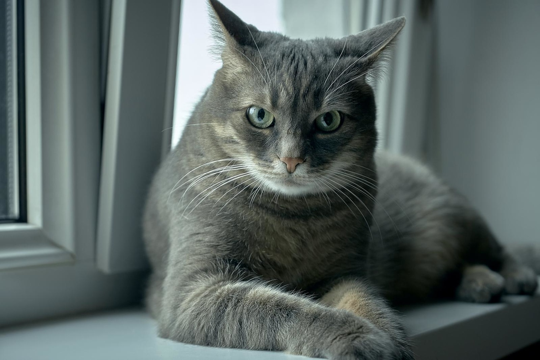 cat on windowsill by Peter Salyuk