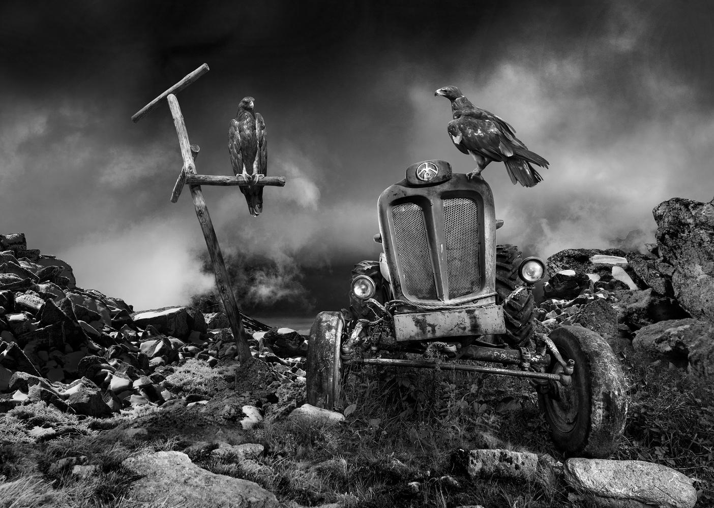 Eagles by Ivan Vukelic