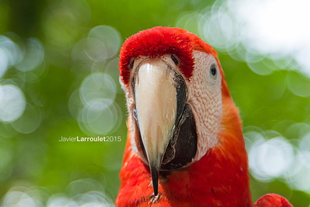 Macaw by Javier Larroulet