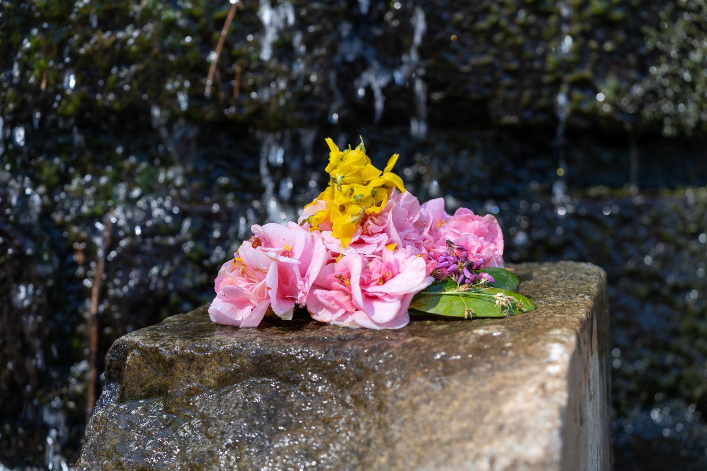 Children's flower by James Dinsmoor