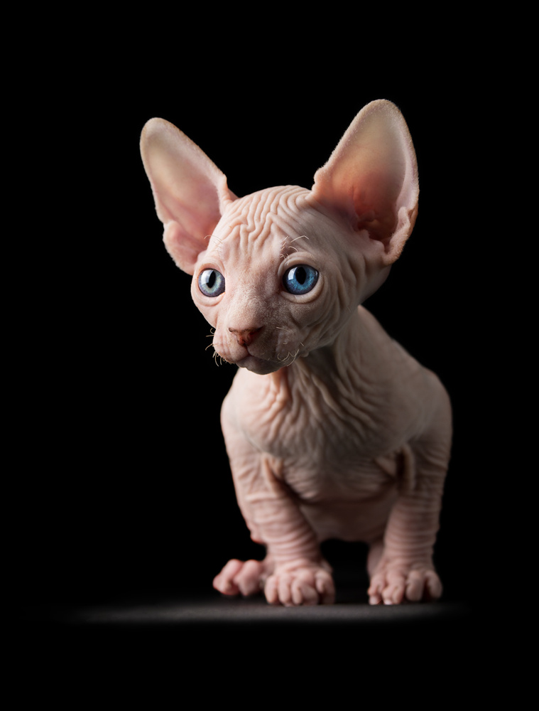 Kitten by Vytenis Malisauskas