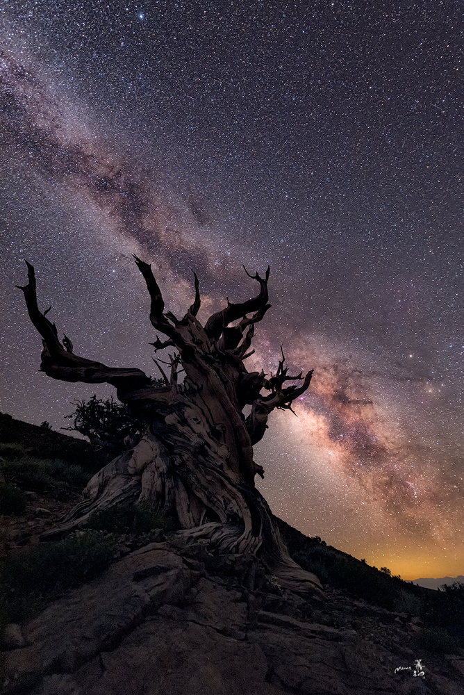 Reach for the stars by Gerald Macua