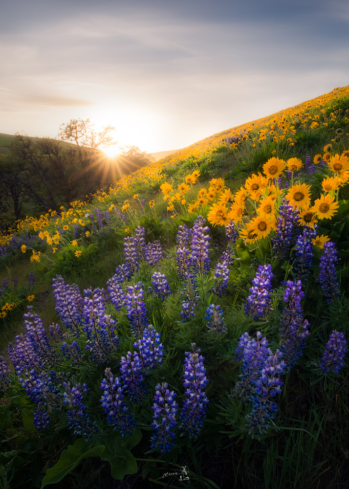 Spring colors by Gerald Macua