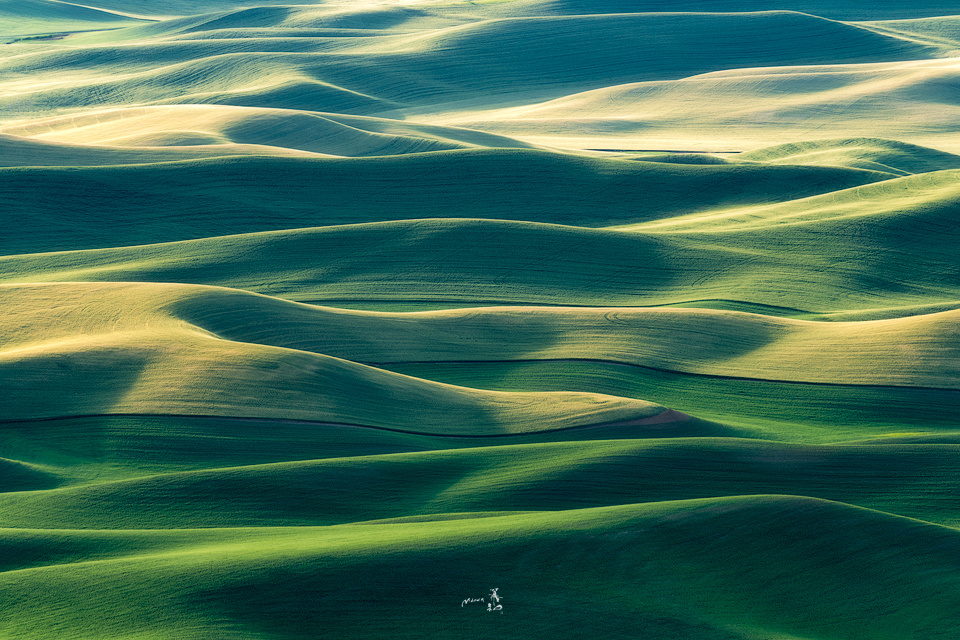 Palouse greens by Gerald Macua