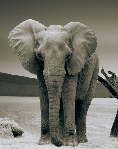 Lonely Elephant by Noel Martin