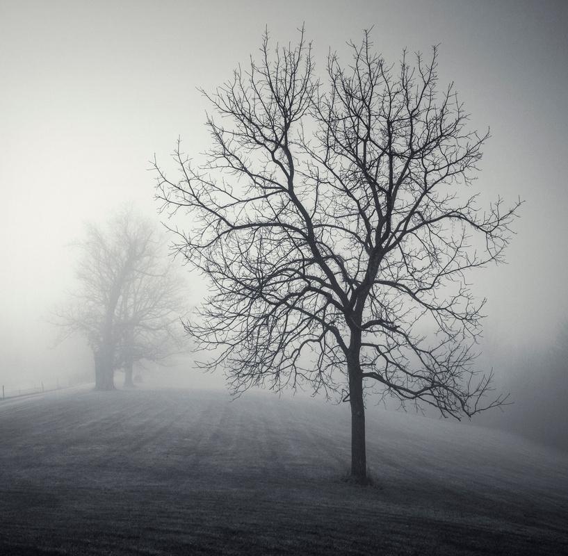 Falling Frost by Scott Marx
