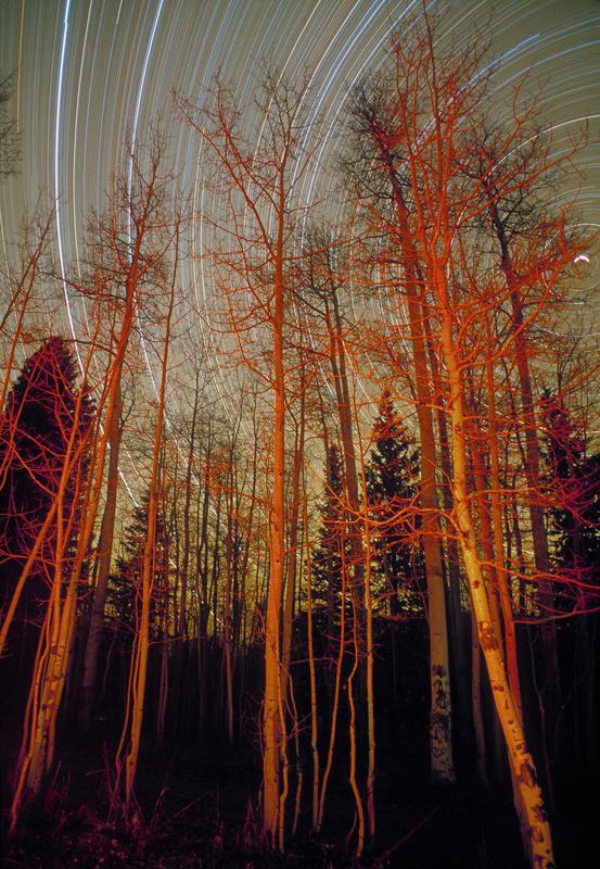 Star Trails : Aspens by Campfire by David Pfau