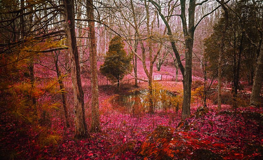 Wonderland by Anthony Presley