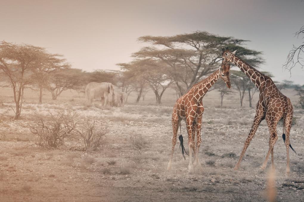 African dust #1 by Edoardo Panella
