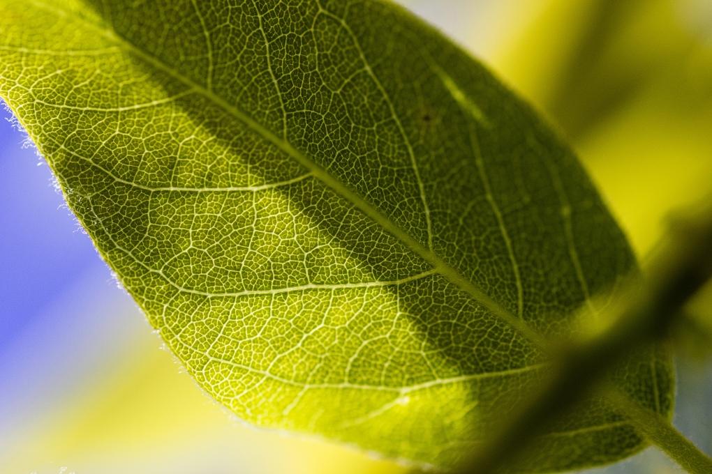 Green by Morgan Jackson