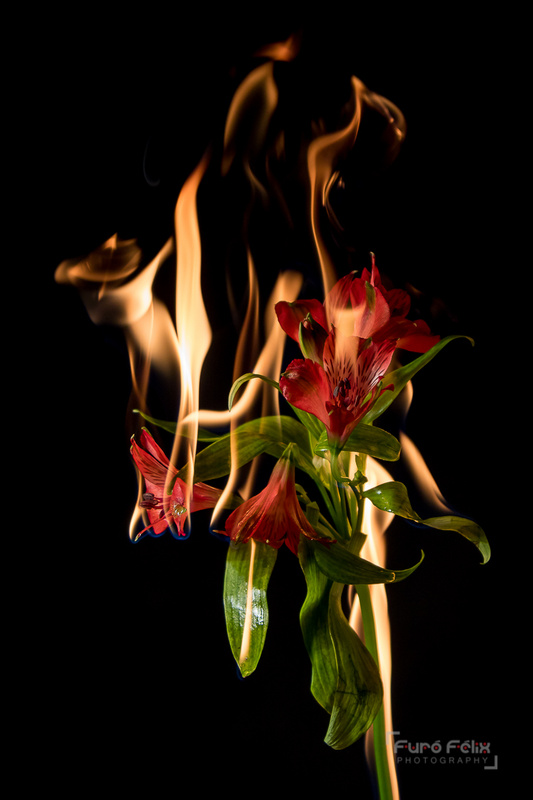 Emotion on fire by Felix Furo