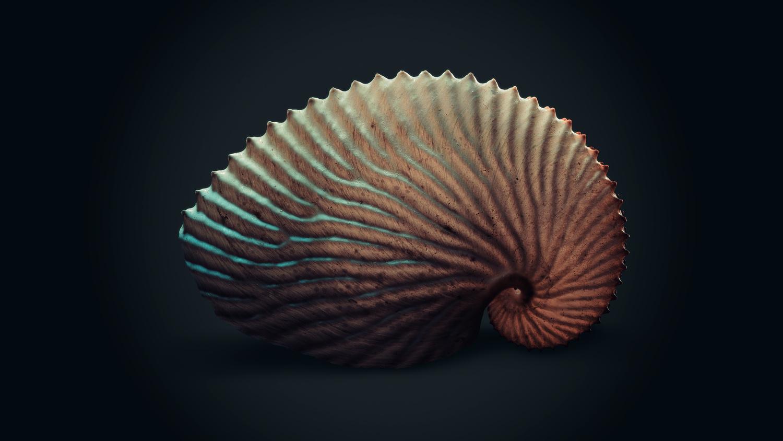 The Nautilus by Fred van Leeuwen